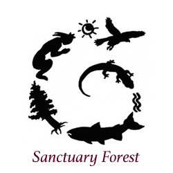 Santuary-Forest-Logo-250px-square